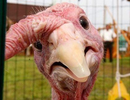 Thanksgiving Eye Trouble