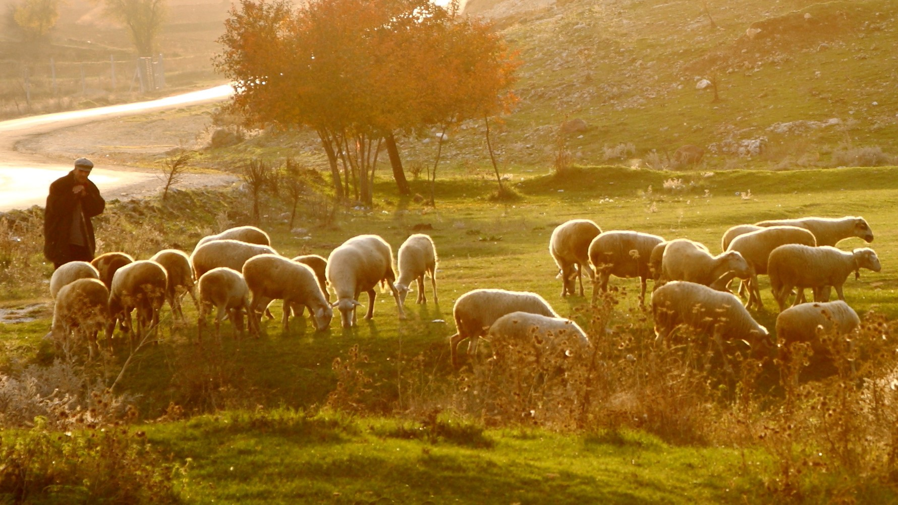 God Shepherds Us Through the Seasons
