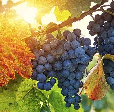 Kingdom Wine (John 2:1-12)