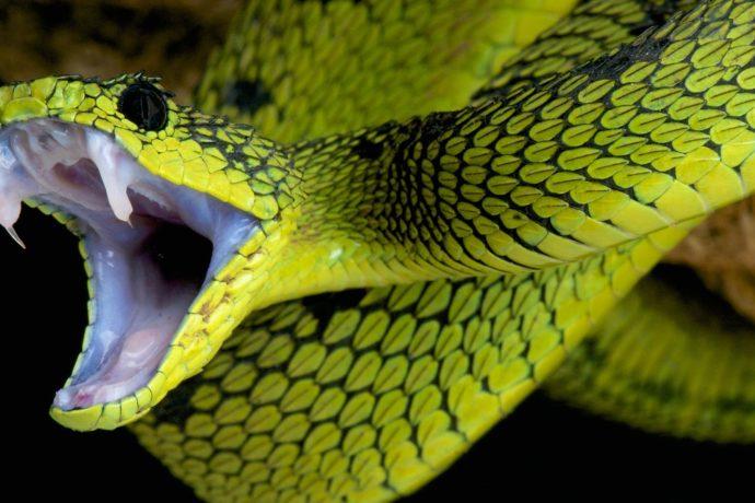 Nicodemus III - Hope for the Snake-bitten! (John 3.14-15)