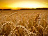 Harvest Talk for Harvest's People